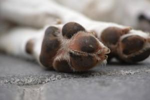 Администрация Самары ищет подрядчика, чтобы убирать с улиц тела животных Отловленных животных будут лечить и пристраивать