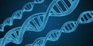 Учёные проанализировали наборы мелких мутаций в геномах 54 миллионов пользователей сайта и сопоставили их с тем, как долго жили их прямые и далёкие родственники.