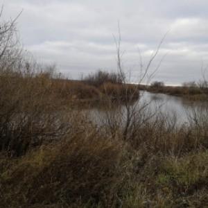 В Самарской области в озере нашли тело младенца