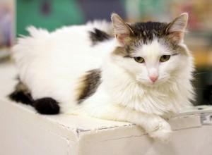 Британцам пригрозили тюрьмой за перевод кошек на вегетарианскую диету