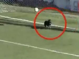 Выбежавшая на поле собака спасла команду от гола в чемпионате Аргентины В результате футболист пробил по пустым воротам.
