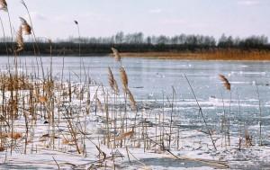 На одном и том же водоеме можно встретить чередование льдов, которые при одинаковой толщине обладают различной прочностью и грузоподъемностью.