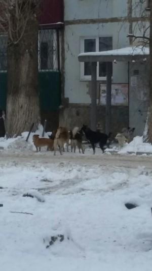 Под Самарой бродячие собаки атаковали детскую поликлинику, каток и несколько дворов
