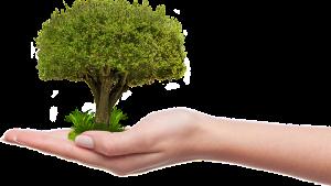 На территории лесного фонда Самарской области в 2018 году произведено лесовосстановление на общей площади 785 га.