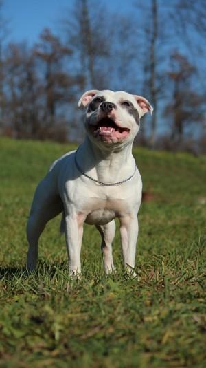 Камеры, установленные на дороге в Сток-он-Тренте, Великобритания, сняли, как владелец оставляет на дороге домашнего пса и уезжает.
