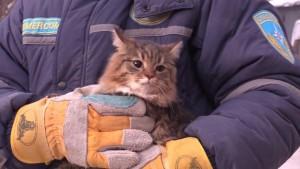 Собаку и шесть кошек спасли из-под обломков дома в Магнитогорске Все животные уже переданы хозяевам.