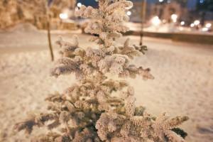 Аномальные морозы установились в Центральной России и Приволжье В Самаре, Ульяновске и Оренбурге в ночные часы было ниже -20, ожидается похолодание до -28 градусов.