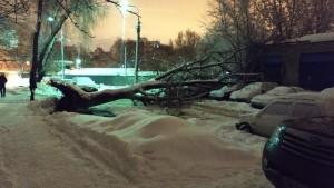 В Самаре упавший тополь раздавил припаркованные машины По мнению очевидцев личному транспорту нанесен значительный ущерб