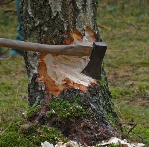 Спикер Совфеда считает, что Иван Валентик за восемь лет своего нахождения в должности так и не смог решить проблемы, связанные с незаконной вырубкой лесов.