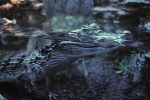 Так рептилии переживают холода.