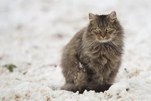 В Иркутской области школьник спас вмёрзшего в лёд кота  Для того чтобы помочь бедному животному, подросток и его мама поливали лёд водой.