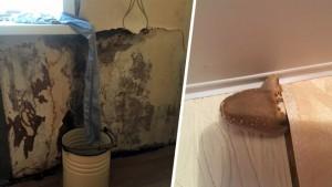Из-за протекающей крыши в самарском доме выросли грибы