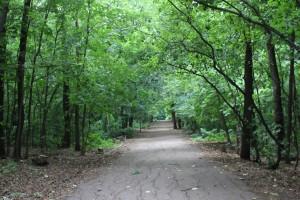 Самарский Минлесхоз приводит в порядок сведения о лесах