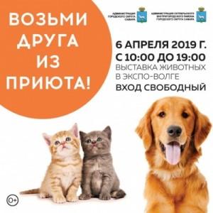 Фестиваль направлен на то, чтобы привлечь внимание общественности к проблемам безнадзорных животных и дать им шанс обрести новых хозяев.