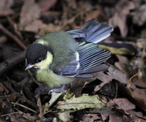 Сегодня во всем мире отмечают День птиц Дата выбрана не случайно: как раз в это время из теплых краев возвращаются пернатые.