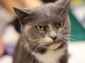 Разработана вакцина от аллергии на кошек