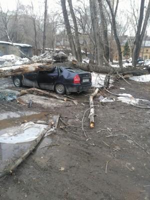 В Самаре упавшее дерево попало сразу надве машины