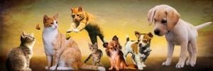 Своих хозяев найдут более 40 собак и 80 кошек.