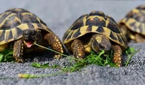 Пограничники изъяли у направлявшегося в Москву жителя Казахстана 131 черепаху