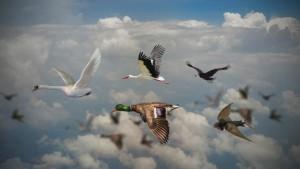 Птицы Самарской области — Фото и описание ᐈ Хищные ᐈ Певчие ᐈ Лесные ᐈ Оседлые