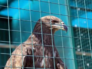 Международный день Земли отметят в Самарском зоопарке