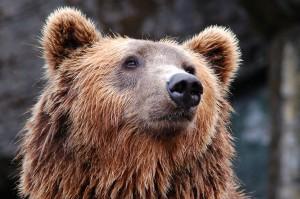 Следственным комитетом Амурской области была начата проверка по факту условий содержания животного на базе.