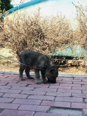 Самарских волчат назвали в честь космодромов Они родились 5 марта этого года.