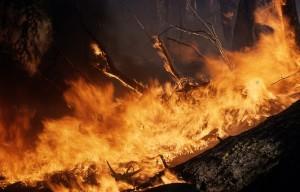 Причиной пожара в нацпарке