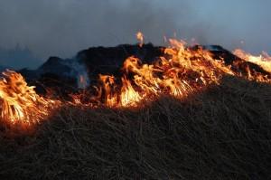На ликвидацию пожара привлекались 28 человек и 13 единиц техники, в том числе от МЧС России 19 человек, 9 единиц техники.