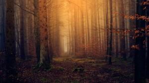 В подмосковном лесу обнаружены останки молодого мужчины, который весной 2017 года ушел в поход и пропал без вести.