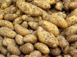 В машине было 5 т картошки, а под ней — 4 т яблок. Отмечается, что у них не было фитосанитарных сертификатов в отличие от картофеля.