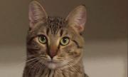 Кондрашов рассказал, почему котам нужно покупать специальный корм