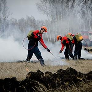 Площадь лесных пожаров в России сократилась до 16,5 тыс гектаров