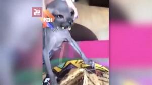 Кот Толя попытался украсть кусок торта и стал звездой Сети