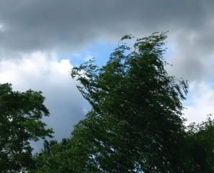 В случае ухудшения погодных условий, находясь на улице, избегайте нахождения рядом с линиями электропередач, деревьями, щитами рекламы и витрин.