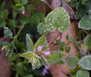 Заморозки представляют опасность для сельскохозяйственных растений в весенний период. Необходимо обеспечить их укрытие полимерной пленкой, нетканым материалом (спанбондом), соломой.