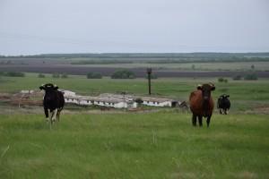 В состав организованной в апреле кооперативной организации, вошли 6 крестьянских (фермерских) и личных подсобных хозяйств.