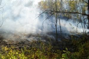В Самарской области сохраняется высокая пожарная опасность лесов