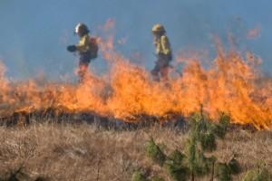 В связи со сложными погодными условиями, сильными порывами ветра и высокой температурой пожар быстро распространялся, местами переходя в «верховой».