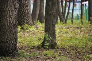 Городские леса Самары опять повели по судам