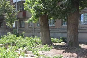 Самарцам объясняют, почему деревья не должны расти на сетях водоснабжения и водоотведения.