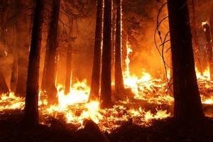 Несколько территорий России горит и тонет