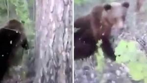 Житель Камчатки пнул медведя