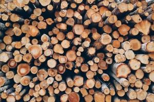 Житель Приморья незаконно вывез в Китай ценных пород дерева на 40 млн рублей