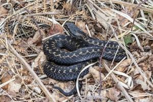 В МЧС рассказали о правилах поведения при встрече со змеей