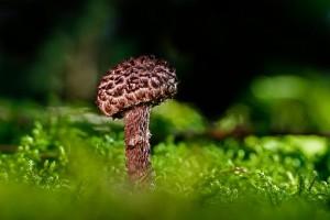 В Самарской области уже 14 человек отравились условно-съедобными грибами К счастью, все выздоровели.