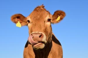 Сотрудники фермы следят, чтобы объятия происходили по обоюдному согласию и животные не пытались уйти от человека