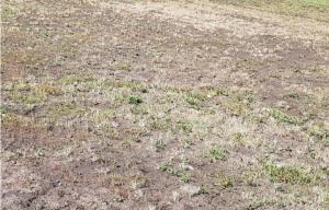 Самарцы жалуются на засохшие газоны на Московском шоссе