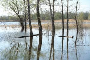 Власти Приамурья предложили ввести режим ЧС федерального значения из-за паводка
