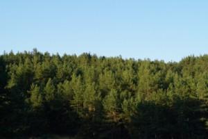 В Самарской области сохраняется высокая пожарная опасность лесов (4 класс)